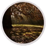 Sunlight In Trees Round Beach Towel