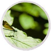 Sunlit Dragonfly Round Beach Towel