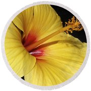 Sunny Yellow Hibiscus Flower Round Beach Towel