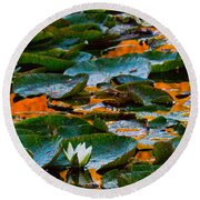 Sunset On A Lily Pond Round Beach Towel