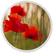Sunset Poppies. Round Beach Towel
