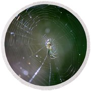 Sunshine On Swamp Spider Round Beach Towel