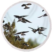 Swallows - All In The Family Round Beach Towel