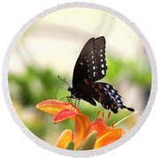 Swallowtail - Lite And Lively Round Beach Towel