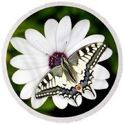 Swallowtail Butterfly Resting Round Beach Towel