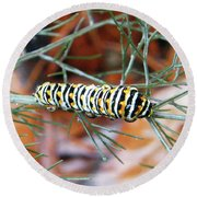 Swallowtail Caterpillar Round Beach Towel