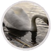 Swan Along The Shore Round Beach Towel