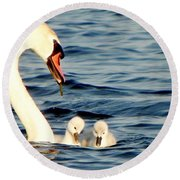 Swan And Signets On Wall Lake  Round Beach Towel