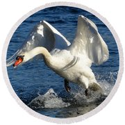 Swan In Action Round Beach Towel