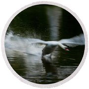 Swan In Motion Round Beach Towel