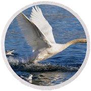 Swan Take Off Round Beach Towel