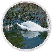 Swan With Cygnets Round Beach Towel