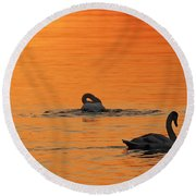 Swans In Early Light  Round Beach Towel