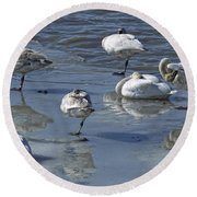 Swans On The Ice Along The Tagish Round Beach Towel