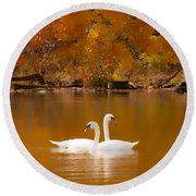 Swans Soft And Smooth Round Beach Towel