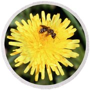 Sweat Bee Round Beach Towel by Science Source