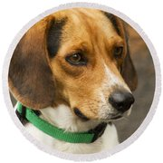 Sweet Little Beagle Dog Round Beach Towel