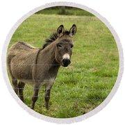 Sweet Little Donkey Round Beach Towel