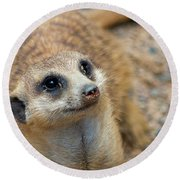 Sweet Meerkat Face Round Beach Towel