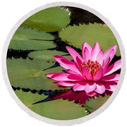 Sweet Pink Water Lily In The River Round Beach Towel
