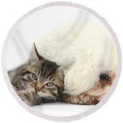 Tabby Kitten And Bichon Fris� Round Beach Towel