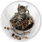 Tabby Kitten In Potpourri Basket Round Beach Towel