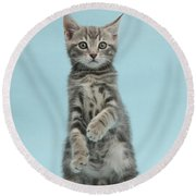 Tabby Kitten Sitting Up Round Beach Towel