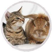 Tabby Kitten With Rabbit Round Beach Towel