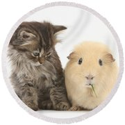 Tabby Kitten With Yellow Guinea Pig Round Beach Towel