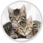 Tabby Kittens Cuddling Round Beach Towel