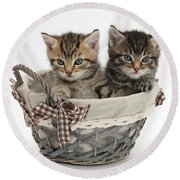 Tabby Kittens In A Basket Round Beach Towel