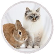 Tabby-point Birman Cat And Rabbit Round Beach Towel