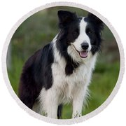 Taj - Border Collie Round Beach Towel by Michelle Wrighton
