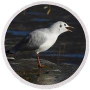 Talking Bird Round Beach Towel