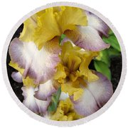 Tall Bearded Iris Named Butterfingers Round Beach Towel