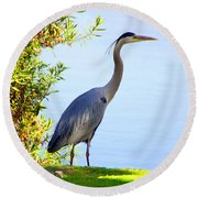 Tall Grey Heron Round Beach Towel