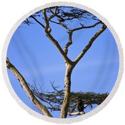Tall Serengeti Tree And Baboon Round Beach Towel