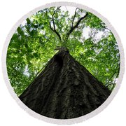 Tall Trees Round Beach Towel
