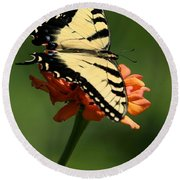 Tantalizing Tiger Swallowtail Butterfly Round Beach Towel