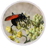 Tarantula Hawk Wasp Round Beach Towel