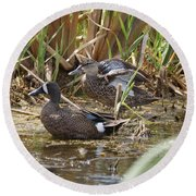 Teal Pair In The Cattails Round Beach Towel