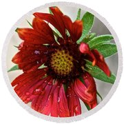 Teary Gaillardia Round Beach Towel