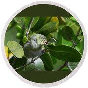 Tennesse Warbler Eating Mangrove Round Beach Towel