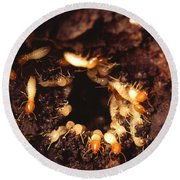 Termite Nest Round Beach Towel by Science Source