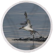Tern Emerging With Fish Round Beach Towel