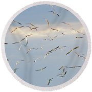 Terns Flying Away Round Beach Towel