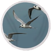Terns In Formation Round Beach Towel