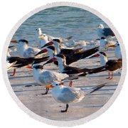 Terns Round Beach Towel