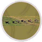 Texas Longhorns Panoramic Round Beach Towel