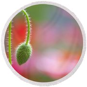 The Bud Of A Wildflower In Columbia Round Beach Towel